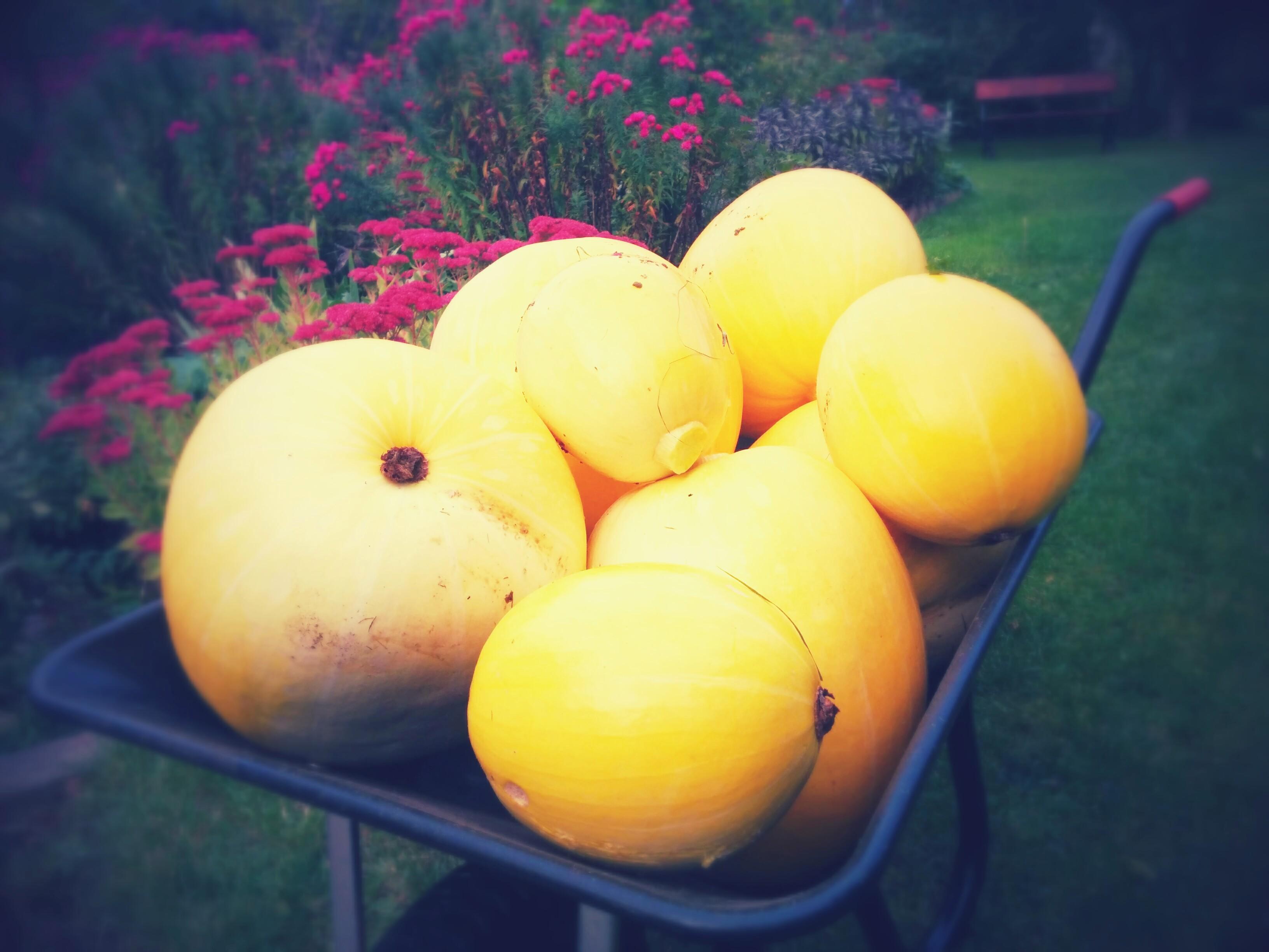 Bumper Harvest