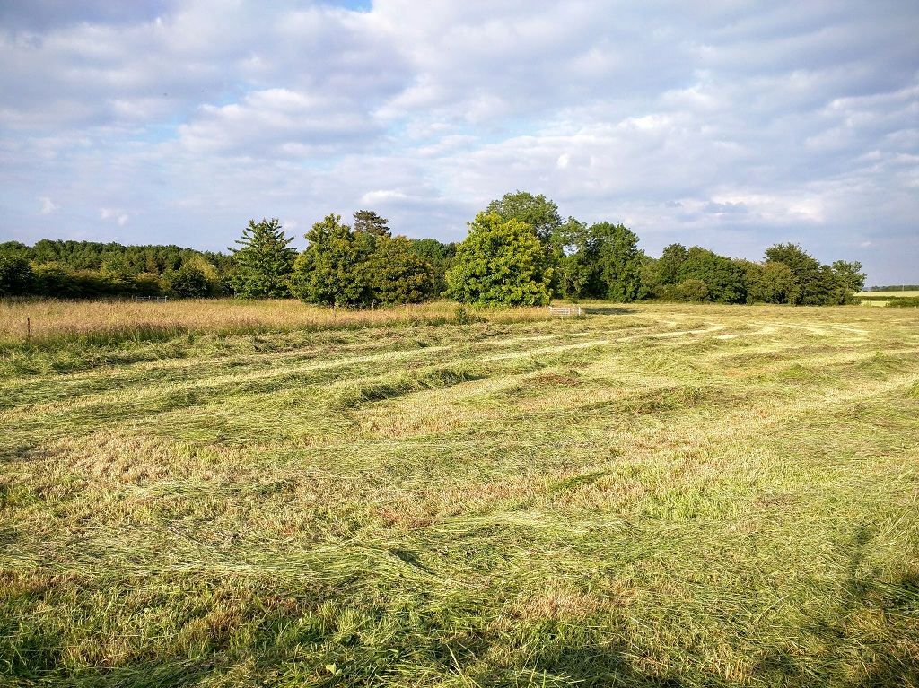 Field with mown grass